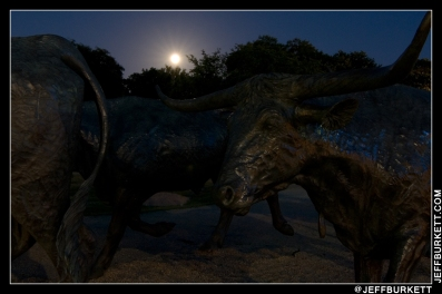 At Pioneer Plaza 'Cattle Drive' sculpture in Dallas (©2013 Jeff Burkett Photography. All Rights Reserved. This material may not be published, broadcast, rewritten, or redistributed without permission.)